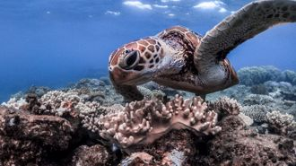 Mike Yardley: Idyllic in Cairns & the Barrier Reef