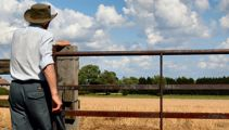 Struggling dairy farmers get mental health support