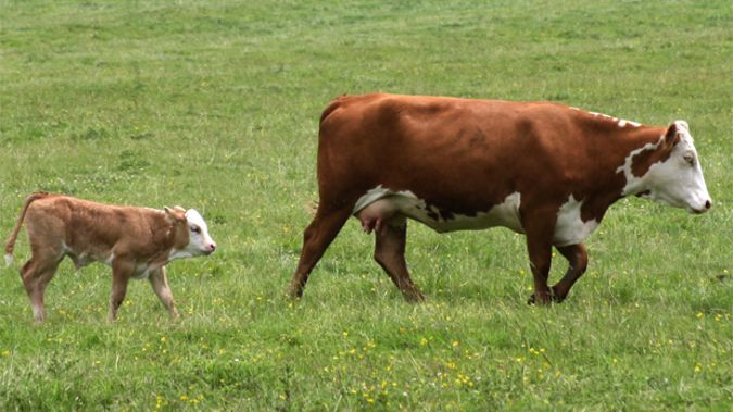 Confidence in New Zealand's rural sector is at a near-decade low. (File Photo)