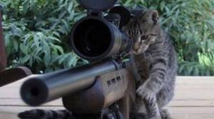 PICS: Purrfect response to Brussels lockdown