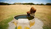 Drought continues to hit Canterbury farmers