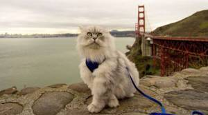 The adventures of Gandalf the travelling cat