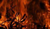 Caller of the Night: Mervyn -  Pinex board fire starters