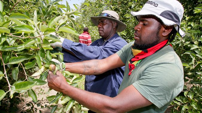 Wilson Loyalty (L) and Graham Nawia, apple orchard workers from Vanuatu in Hastings, 10 December 2015 (NZME.)