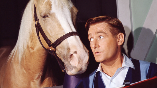 Alan Young of Mr Ed fame dies aged 96