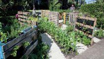 Jacque Tucker: Vertical gardens