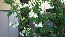 Jacque Tucker: How to make your garden smell great