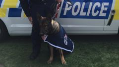 Two-year-old police dog Rush is the youngest dog to win the top spot (Georgia Nelson).