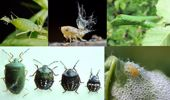 Jacque Tucker: Beastly bugs and where to find them
