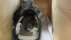 Canadian cat deported after 'stupid' smuggling attempt