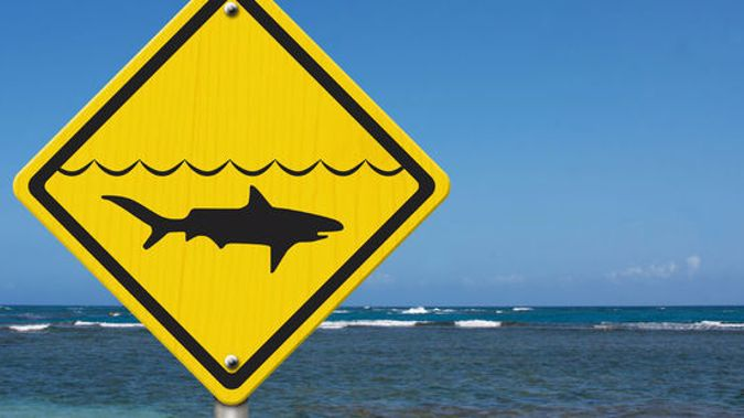 Helicopters will be deployed along Victoria's coast again today, to patrol popular beaches as shark sightings continue. (123RF)