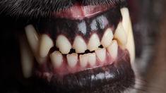 Boy injured in Wairoa dog attack