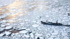 Japanese whalers hunting in Antarctic waters (CNN).