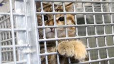 Andrea Midgen: Pet shops selling un-desexed kittens to blame for full SPCA shelters