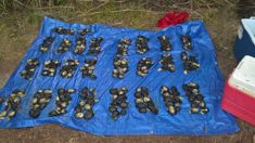 Largest paua bust in more than a decade