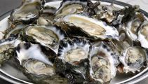 Health warning over Auckland oysters
