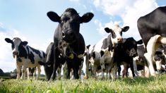 Boost for dairy farmers as index rises