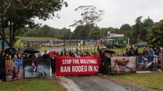 Animal rights group protest 'barbaric' rodeos