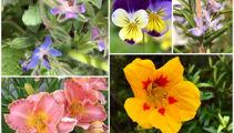 Jacque Tucker: Edible flowers
