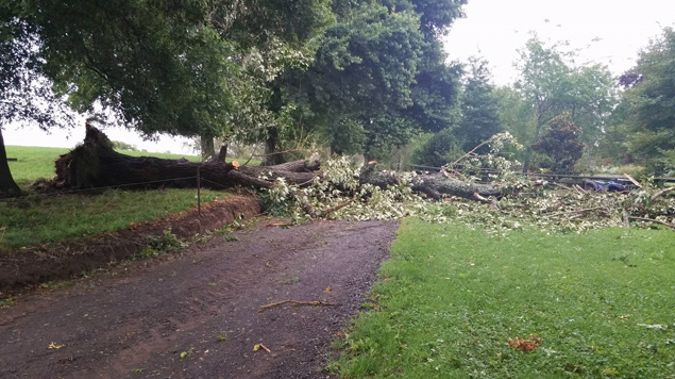 A Waikato family are trapped in their home after a massive tree crashed over their driveway. (Supplied)