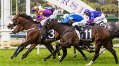 Auckland Cup Day postponed after heavy rain