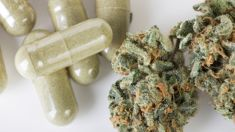 Huhana Hickey: Domestic industry for medicinal cannabis