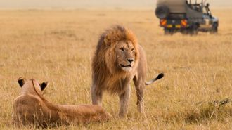 Travelbug: Safari Tours
