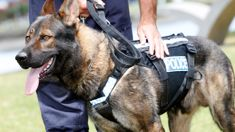 Marama Fox: Change of approach to police dog use needed