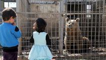 Kiwi's bid to save bear, lion in ISIS-held Mosul