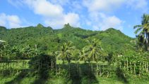 Mike Yardley: Backroads Rarotonga