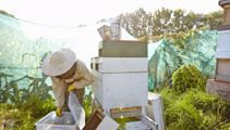 Karin Kos: Tough season for NZ beekeepers