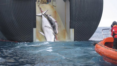 NZ spied on Japan as part of anti-whaling push: Snowden document