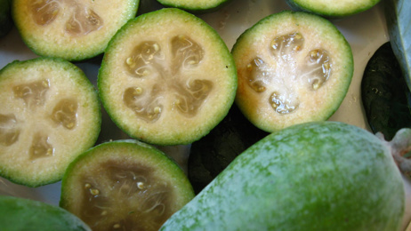 Jacque Tucker: How to have your own Feijoa grove at home