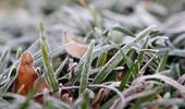 In the garden with Jacque Tucker: Fighting frost