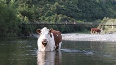 Mike Joy: 'To claim 97 percent of our waterways are fenced off from dairy cattle is wrong'