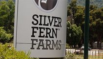 Silver Fern Farms denies shareholders and workers were kept in the dark about closure