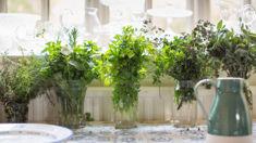 Jane Wrigglesworth: Herbs for winter wellness