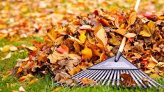 Jacque Tucker: What to do with all those leaves