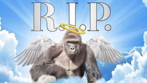 Social media remembers Harambe, one year on