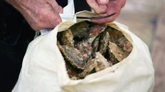 A prominent Bluff oysterman says MPI should have put in security measures straight away when they found a parasite amongst oysters. (Getty)