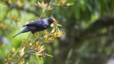 Ruud Kleinpaste: The plight of our native birds