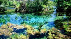 Govt accepts bid to protect famously clear Golden Bay spring