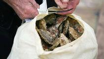 Mass cull of Stewart Island oysters
