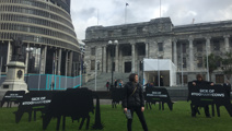 Greenpeace, doctors, protest dairy farming with wooden cows outside Parliament