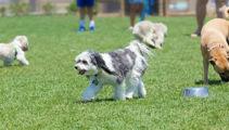 Nadine Higgins: Be a tidy Kiwi, pick up after your dog