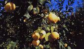 Jacque Tucker: When your lemon tree's a lemon