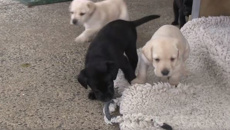 VIDEO: Police unveil cutest new recruits