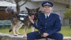 Canines and companions battle it out for 'top dog'