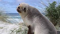 Confirmed: Sea lion on Otago beach was shot