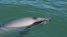 US decision on dolphins could affect seafood exports